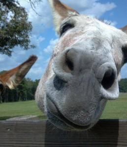 Love those donkeys…I mean couples…