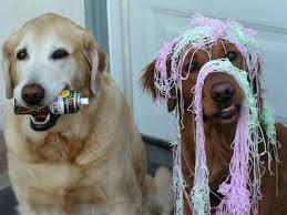 birthdaydogs
